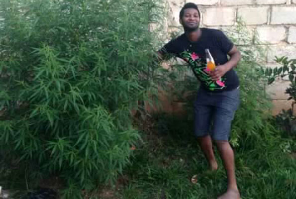the marijuana plants found in Goodlyfe's home.